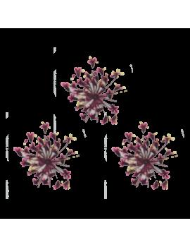 Mini Fleur Séchées